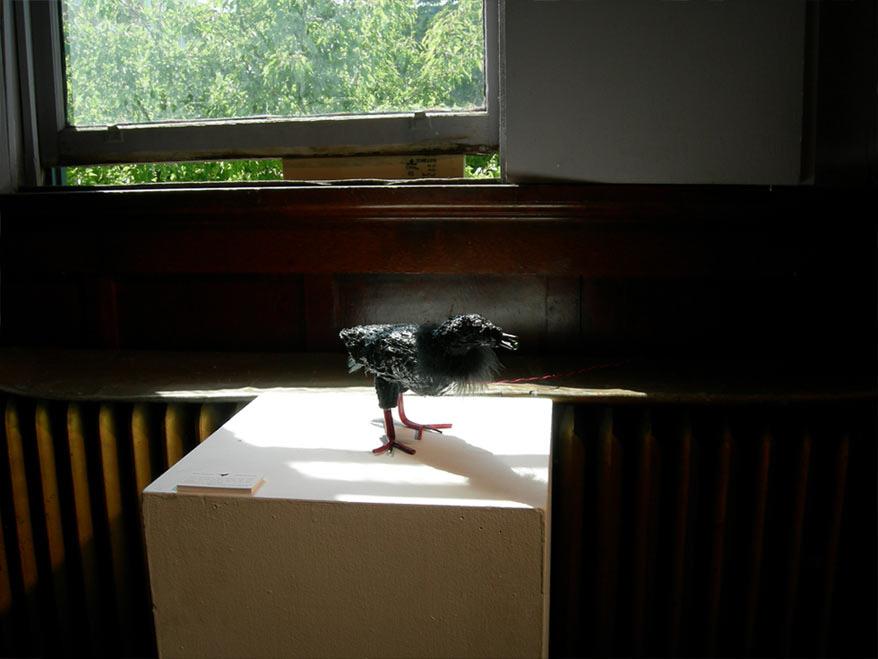 crowbotinstalled